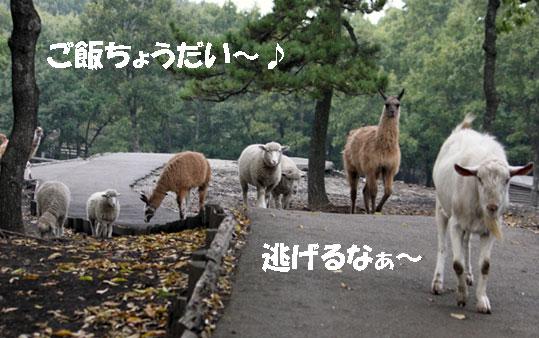 くじゅう自然動物園