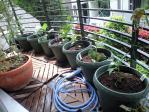 菜園1104301
