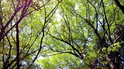 弥勒山の木々