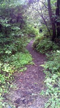 尾張富士から入鹿池ルート2