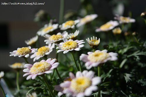 390_20121215190443.jpg