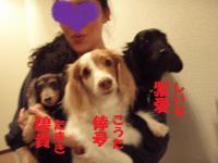 倖夛❤紫愛❤碧貴まま