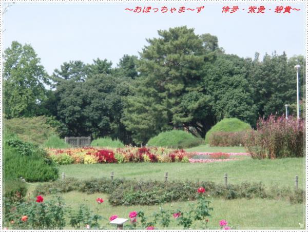 PA060356-1.jpg