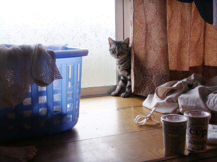 洗濯とびー1