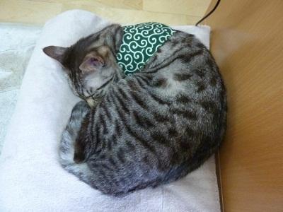 眠るどろぼう猫