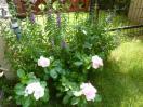 夏花壇の名残