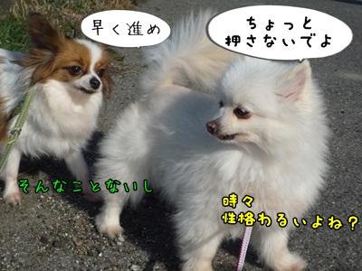 ぴーすけP1280431