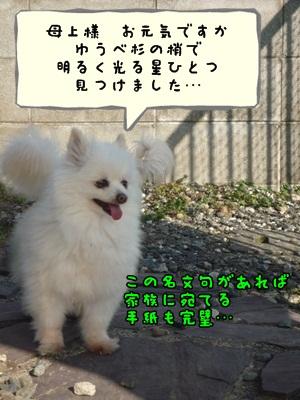 ぴーすけP1280502