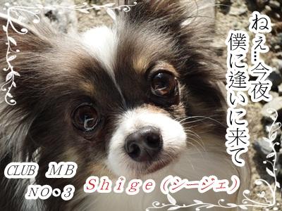 しげひこP1290264