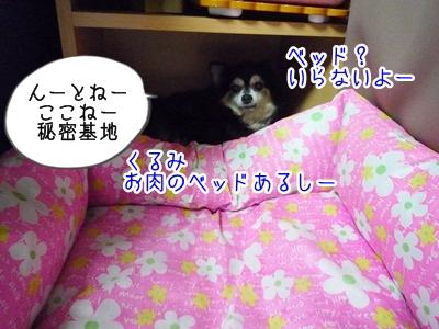 くるみP1300476
