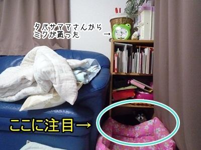 くるみP1300478