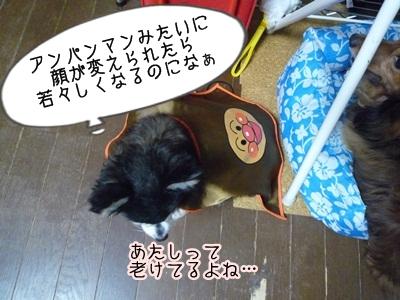 くるみパンマンP1300856