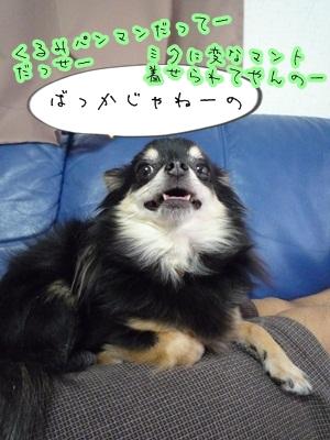くるみパンマンP1300839