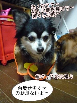 くるみパンマンP1300853