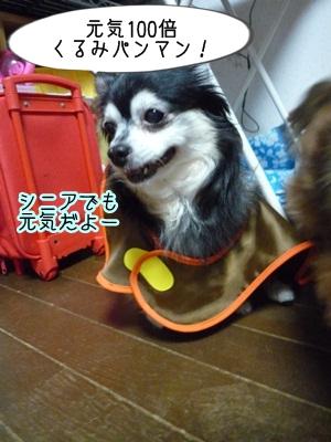 くるみパンマンP1300852