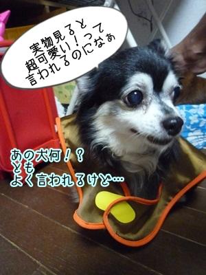 くるみパンマンP1300845