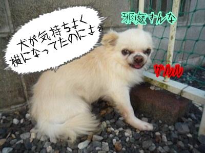 青汁P1300819