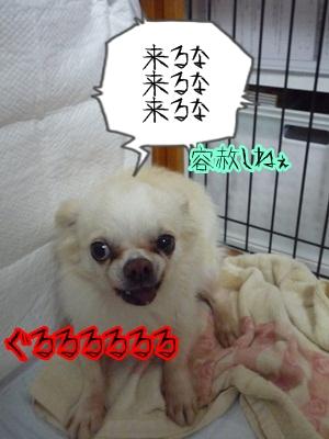 青汁P1300806