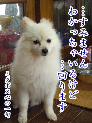 川柳P1300999