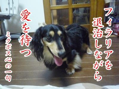 川柳P1310110