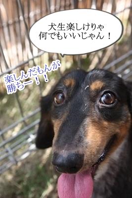 半蔵IMG_5747