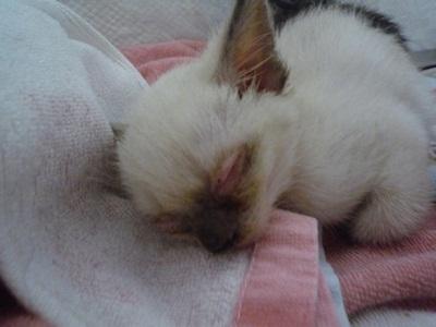 子猫P1310576