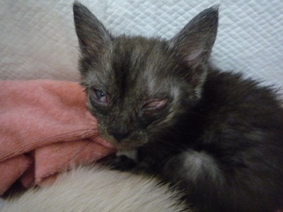 子猫P1310575