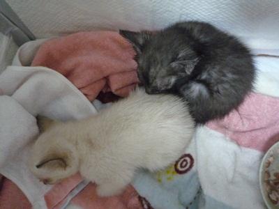 子猫P1310578