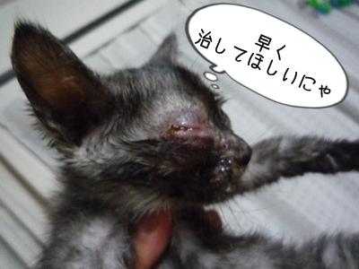 ねこじろうP1320041
