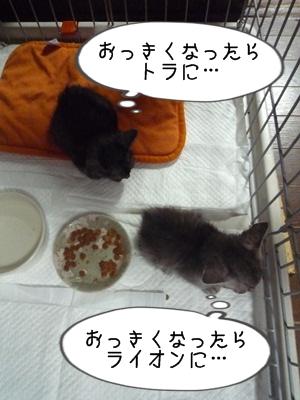 ねこじろうP1320087