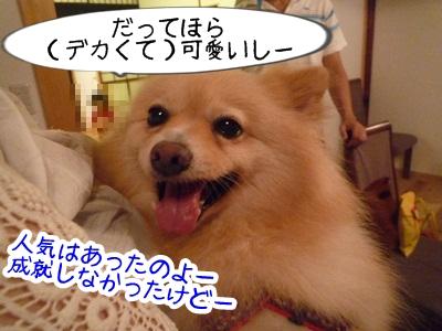 きなこP1310595