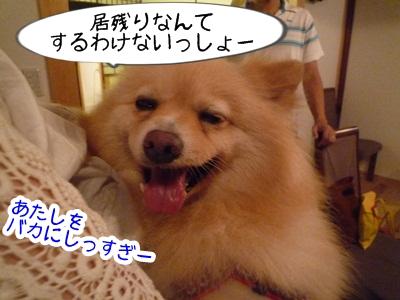 きなこP1310594