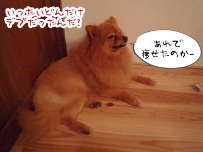きなこP1310684