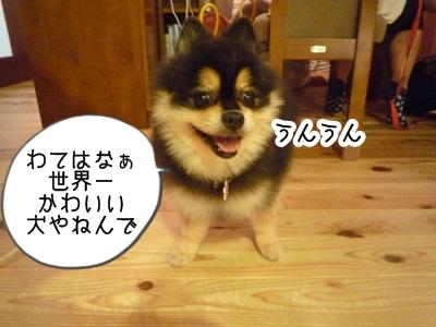 きなこP1310615