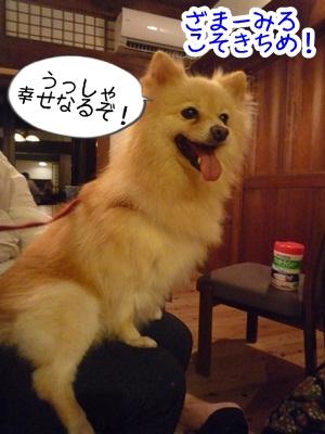 きなこP1310709