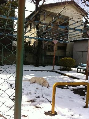 雪の日2お