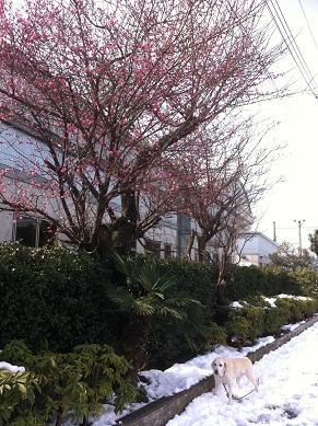 雪の日2い