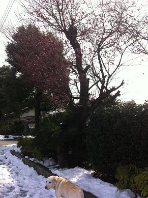 雪の日2あ