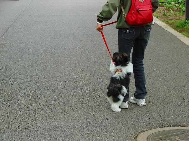 歩くの嫌ー、抱っこして
