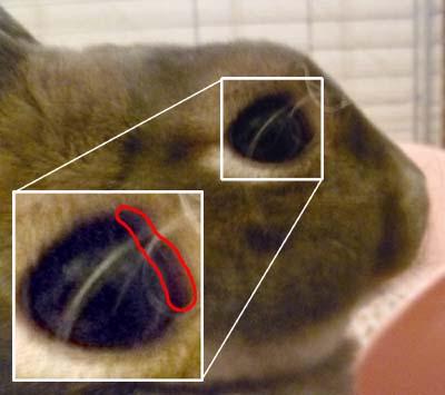 20110912:結膜炎?1.jpg