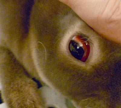 20110912:結膜炎?2.jpg