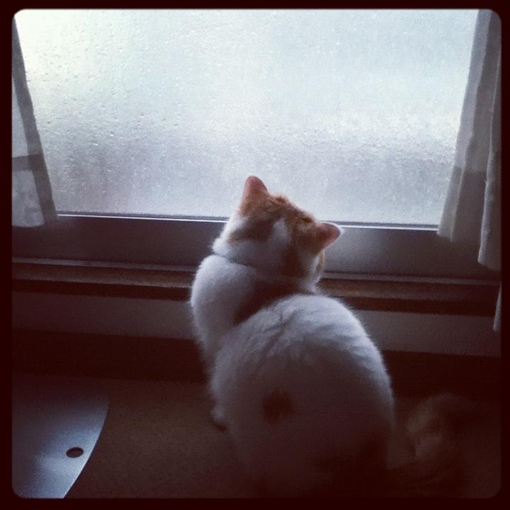 雨すごいでしね~