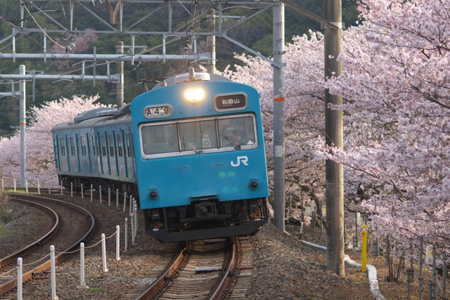 110411-JR-W-103-sakura-1.jpg