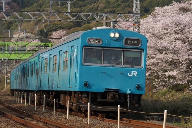 110411-JR-W-103-sakura-3.jpg