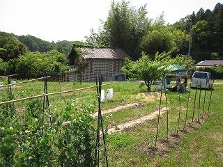 わが家の菜園