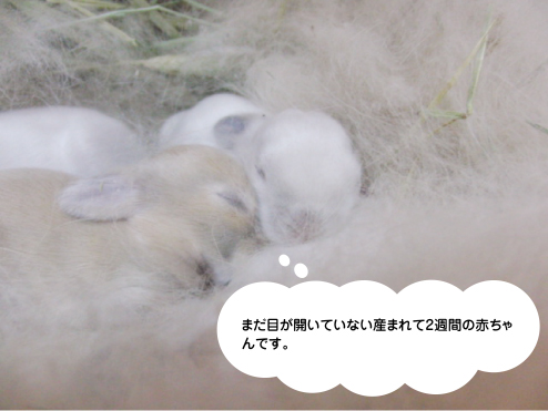 mimi赤ちゃん03