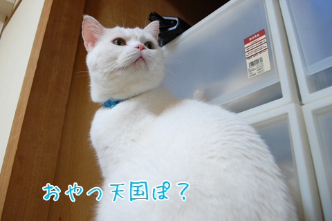 101021_引っ越し前日01