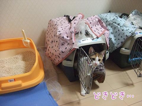 101022_引っ越し09