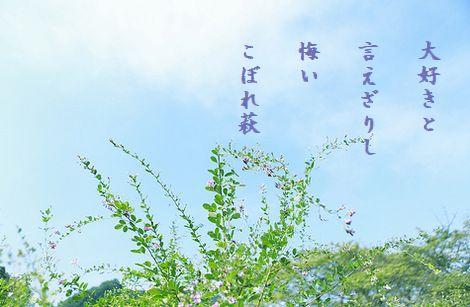 はぎの花4