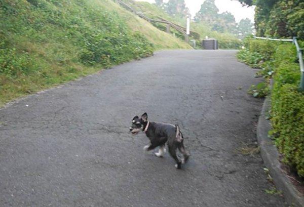 御殿場朝の散歩-1